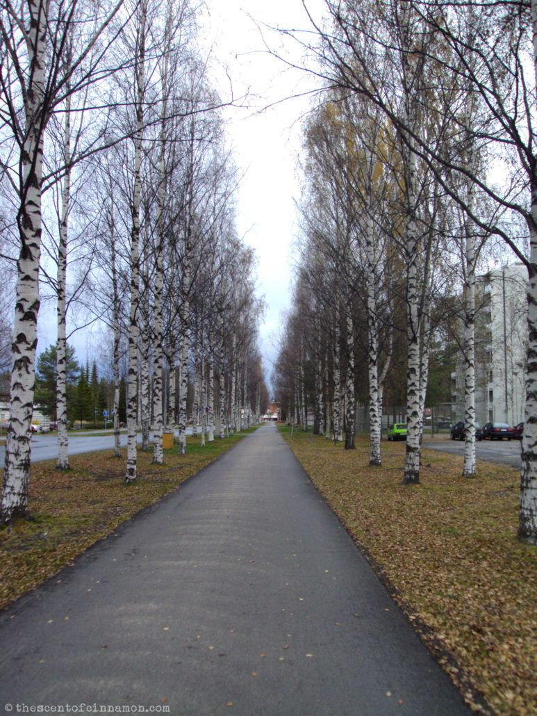 University of Oulu - The Scent of Cinnamon